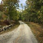 Il vialetto nel bosco che porta ad Acceglio