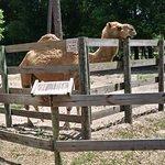 Foto de Two Tails Ranch