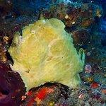 Photo de Two Fish Divers Lembongan