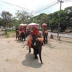 ช้างเดินมารับนักท่องเที่ยวจะจะนั่ง