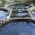 salmon farming ponds