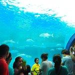 ภาพถ่ายของ สถาบันวิทยาศาสตร์ทางทะเล มหาวิทยาลัยบูรพา