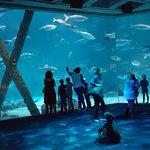 Foto de Audubon Aquarium of the Americas