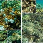 Foto de Sunlover Reef Cruises