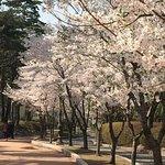 Photo of Yeouido Park