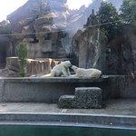 صورة فوتوغرافية لـ Budapest Zoo & Botanical Garden