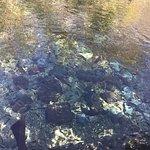vista do fundo do rio