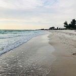 Manatee Public Beach Foto