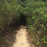 صورة فوتوغرافية لـ Wong Nai Chung Gap Trail