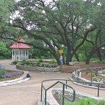 large oak trees in Austin Arboretum