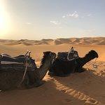 Camel buddies