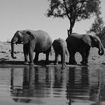 Foto de Jaci's Safari Lodge