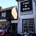 Fish & Eels Dobbs Weir