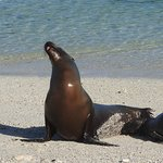 Momma Sea Lion and Baby