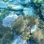 Some of the coral and marine life we saw - Clownfish