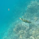 Some of the coral and marine life we saw - moon wrasse