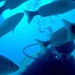 Foto de Costa Rica Dive and Surf