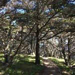 Point Lobosの写真