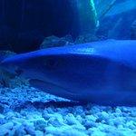 Grand Aquarium de Touraine照片