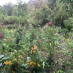 Foto de Jardin El Encanto