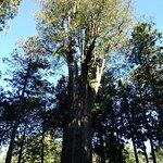 ภาพถ่ายของ Alishan National Forest Recreation Area