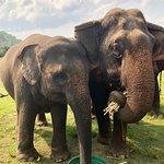 Photo of Kanta Elephant Sanctuary
