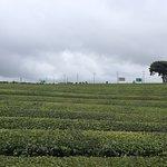 ภาพถ่ายของ O'Sulloc Tea Museum