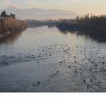 Foto van Pinios River