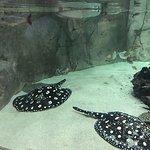 Photo of Aquarium Planet Ocean