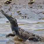 Foto de Jose's Crocodile River Tour