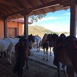 Horses @ Borinquen