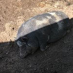 Foto di Mablethorpe Seal Sanctuary and Wildlife Centre