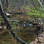 Hawn State Park Missouri 06 Pickle Creek near Site 13