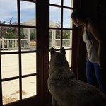 Freedom, the one after whom the ranch is named, is looking outside where the squirrels are