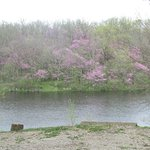 Spring view across the lake