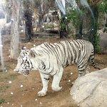 صورة فوتوغرافية لـ Emirates Park Zoo