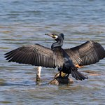Ảnh về Rye Harbour Nature Reserve