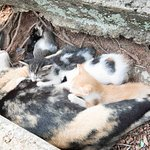 Stray cats found at the site