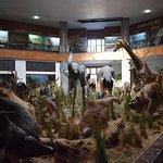 African wildlife on display