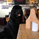 Dog's very welcome at The Bay View Inn - no matter the size