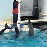 Foto Kobe City Suma Marine Aquarium