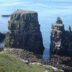 Off-shore rocks near Seabird Centre, festooned with guillemots