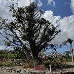 Baobab tree at the entrance.