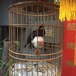 The chinese speaking birds