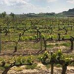 Foto de Thabuca Wine Tours