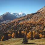 Grossglockner and autumn colours