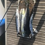 Mahi Mahi and barracuda. Nice day's catch plus our two marlin