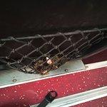 ภาพถ่ายของ Giant Ibis Transport