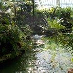 Like a Jungle under glass