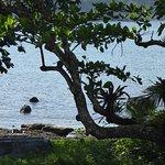 Foto de Portobelo National Park